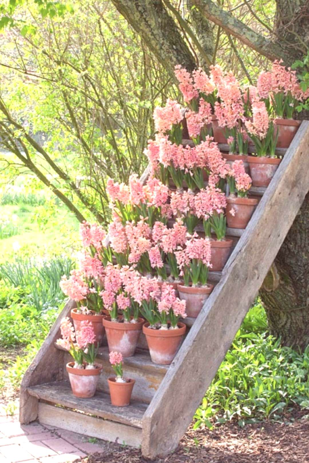 15 Unique and Beautiful Container Garden Ideas-Hyacinth