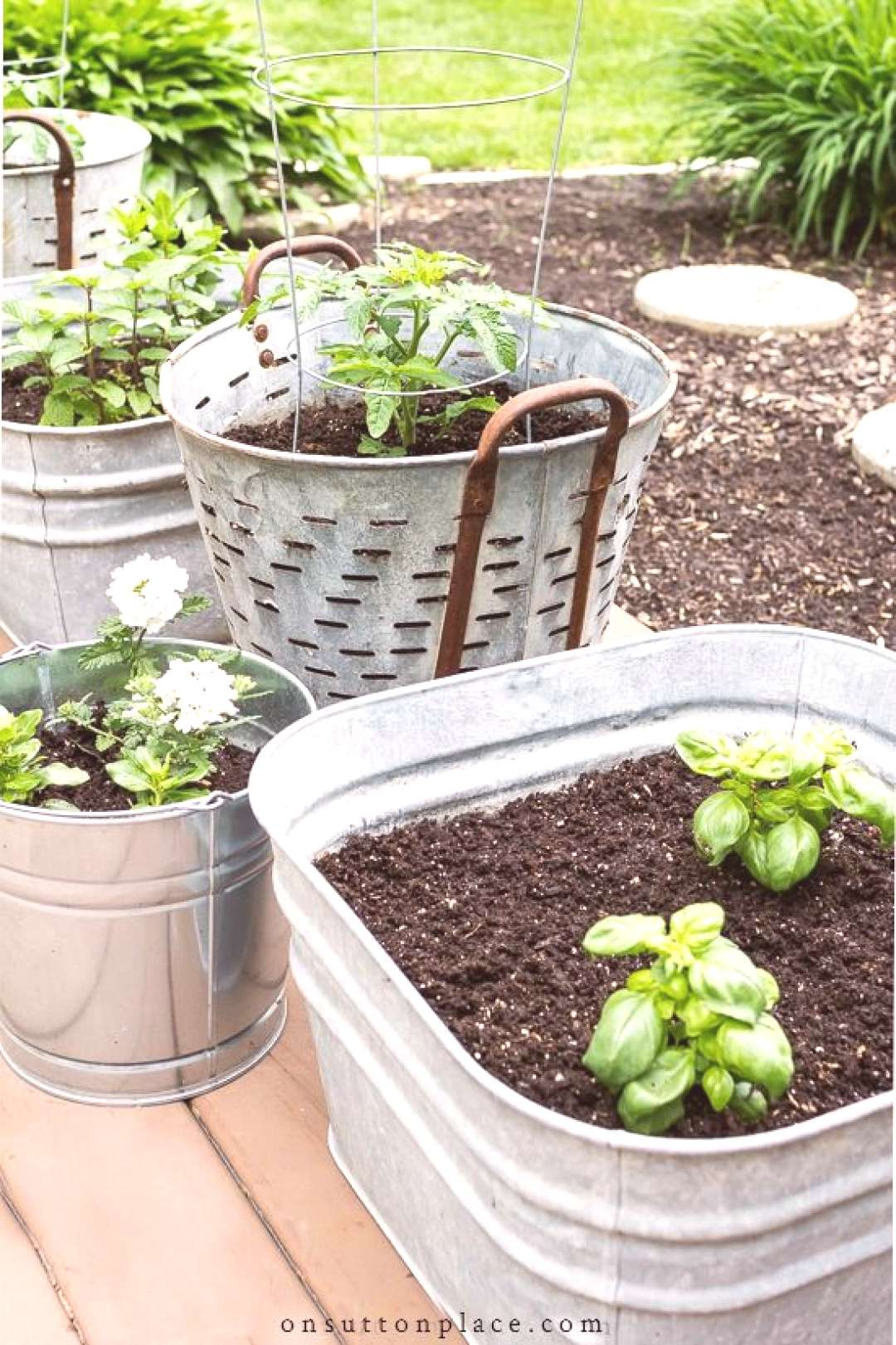 5 simple tips for successfully growing herbs in containers. Includes a list of herbs that can be pl