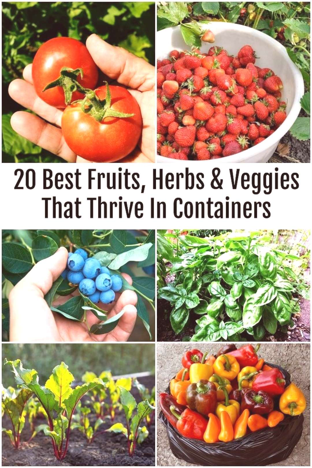 Having fresh and handy fruits, vegetables and herbs is not the only advantage to container gardenin