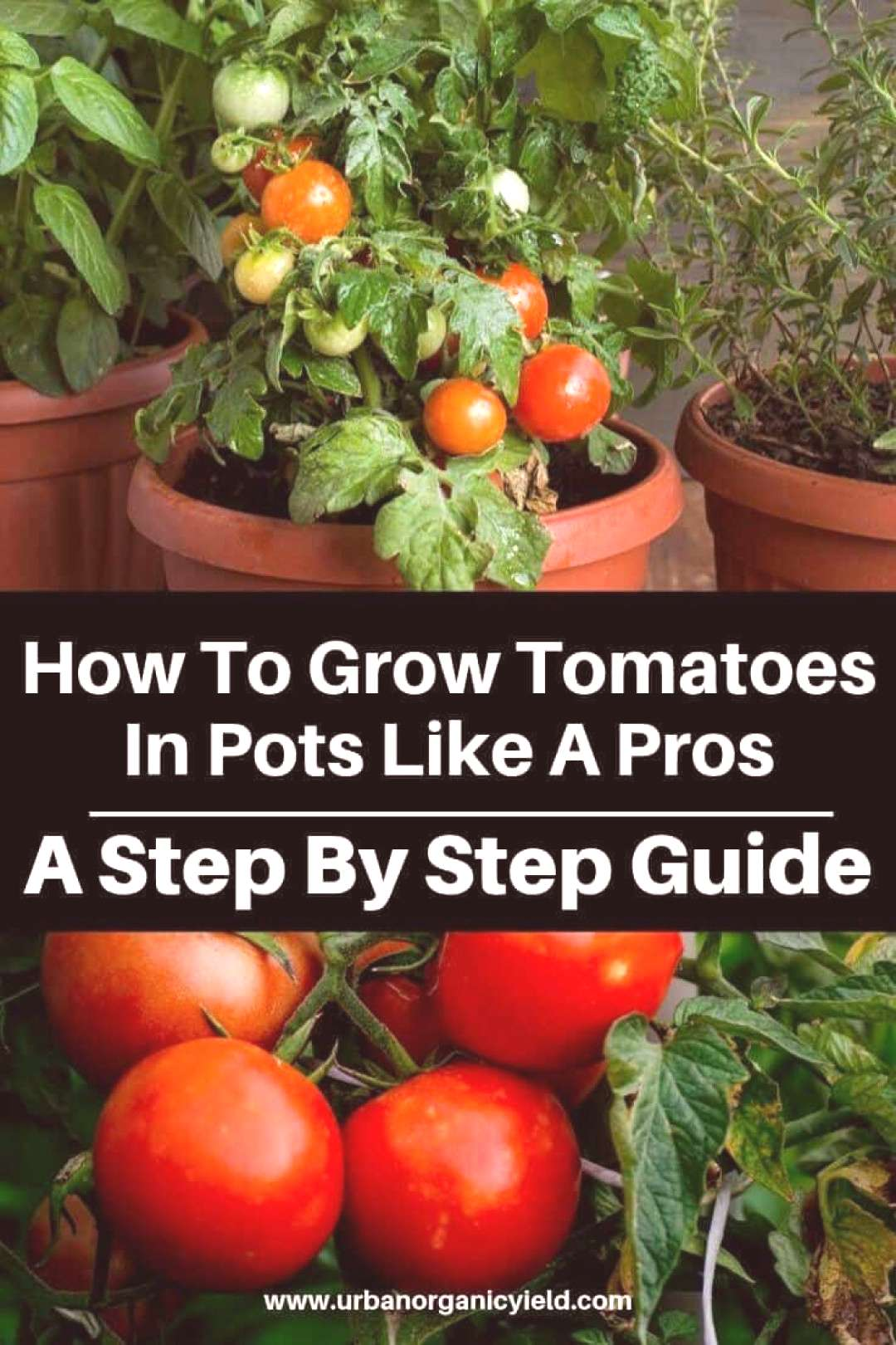 In this article, we'll take a closer look at popular types of tomatoes to grow in containers, and
