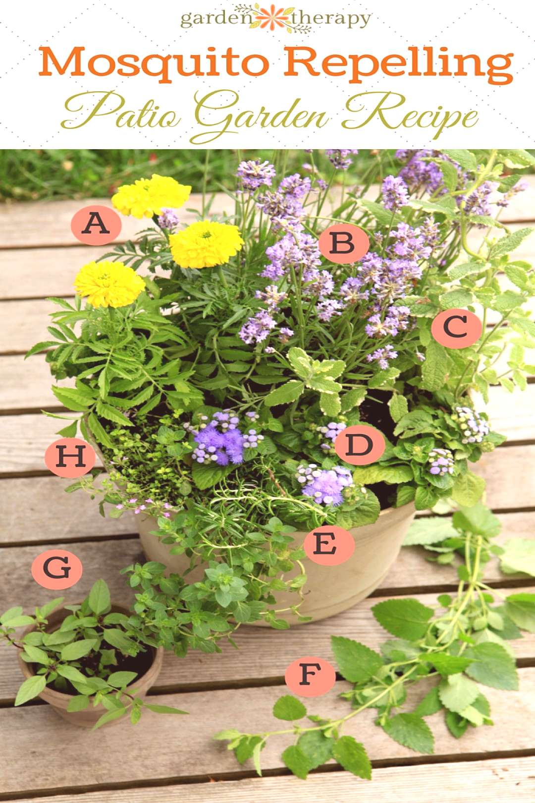 Plant a Mosquito-Repelling Container Garden to Protect Entertaining Spaces   Garden Therapy