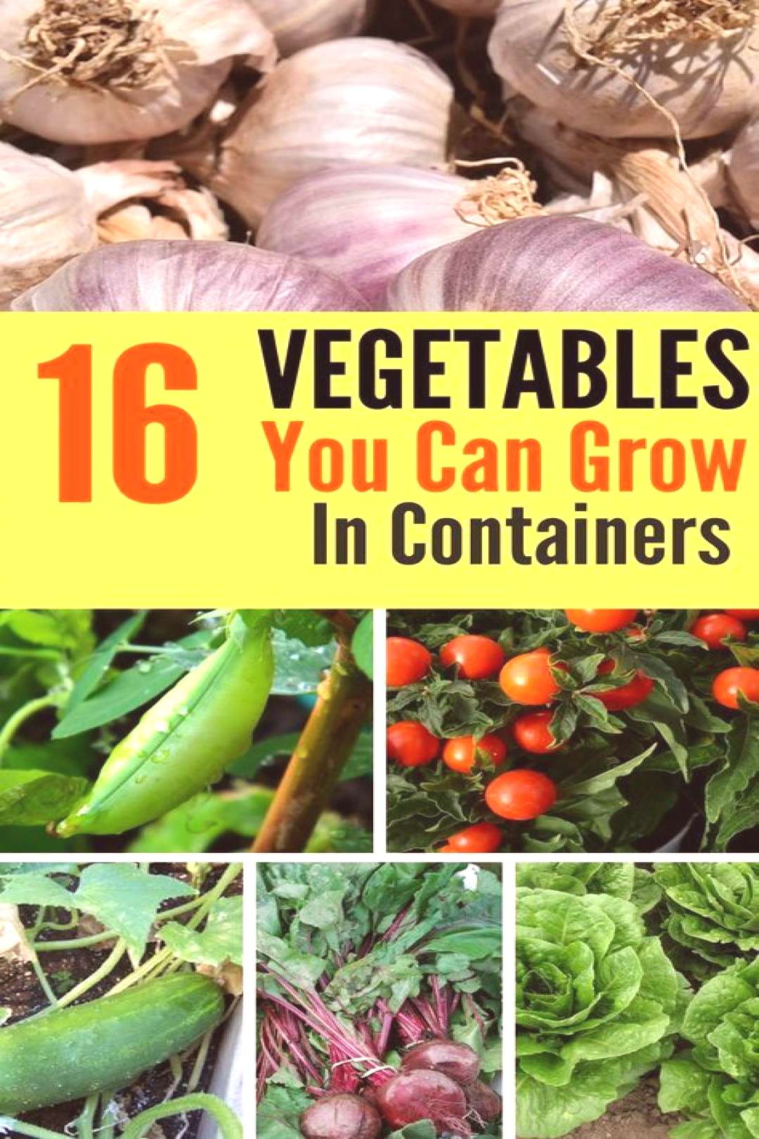 Try your hand at container gardening with these 16 delicious vegetables that are perfect for growin